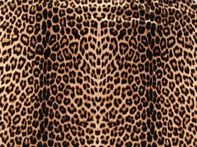 ANIMAL PRINT ON STRETCH NET